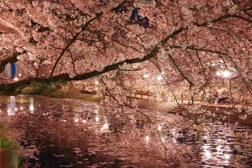 Ikeuchi responsibly uses water from the pure springs of Saijo, pictured in a garland of sakura